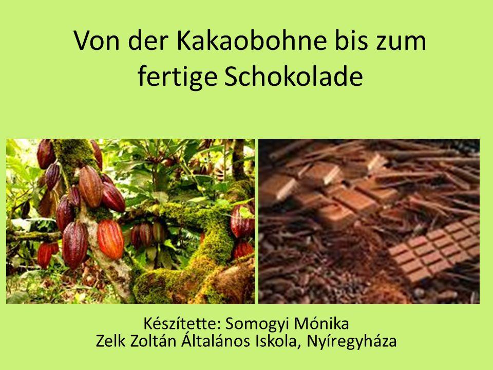 Von der Kakaobohne bis zum fertige Schokolade Készítette: Somogyi Mónika Zelk Zoltán Általános Iskola, Nyíregyháza