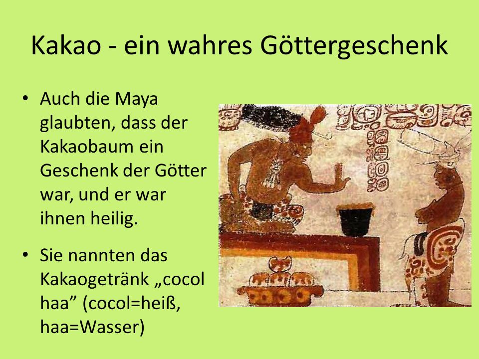 Kakao - ein wahres Göttergeschenk Auch die Maya glaubten, dass der Kakaobaum ein Geschenk der Götter war, und er war ihnen heilig.