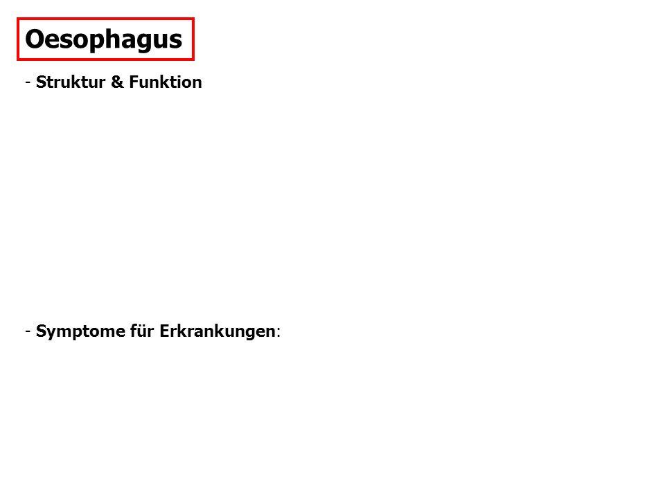 Oesophagus - Struktur & Funktion - Symptome für Erkrankungen: