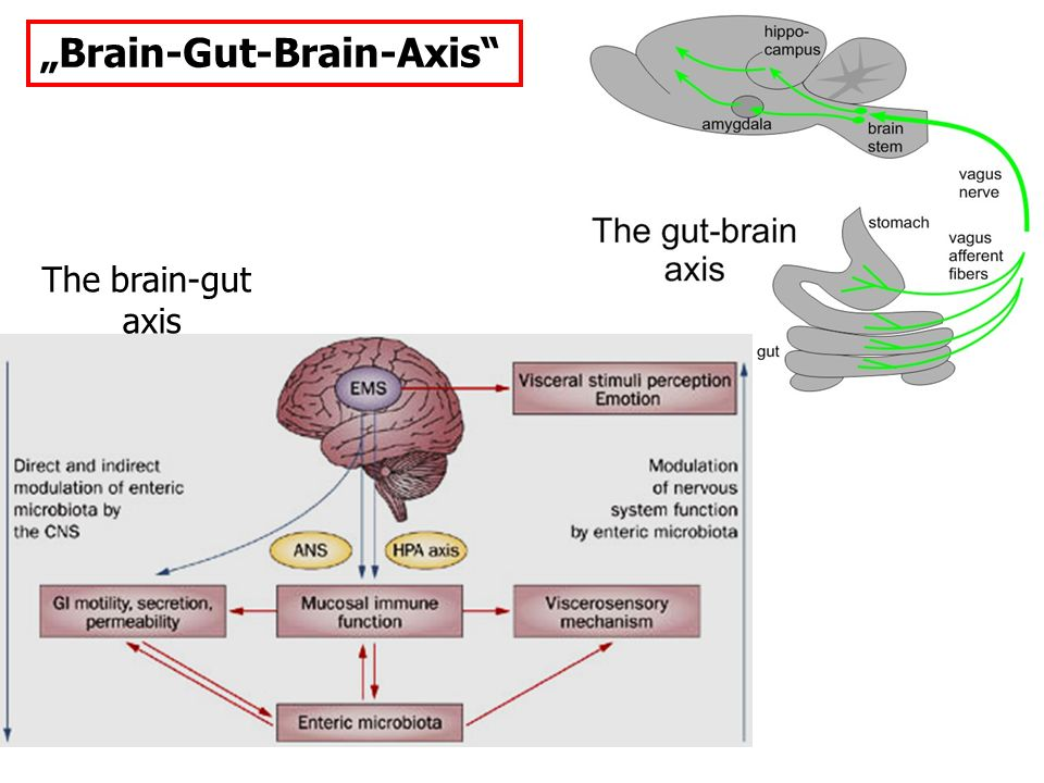 """Brain-Gut-Brain-Axis The brain-gut axis"