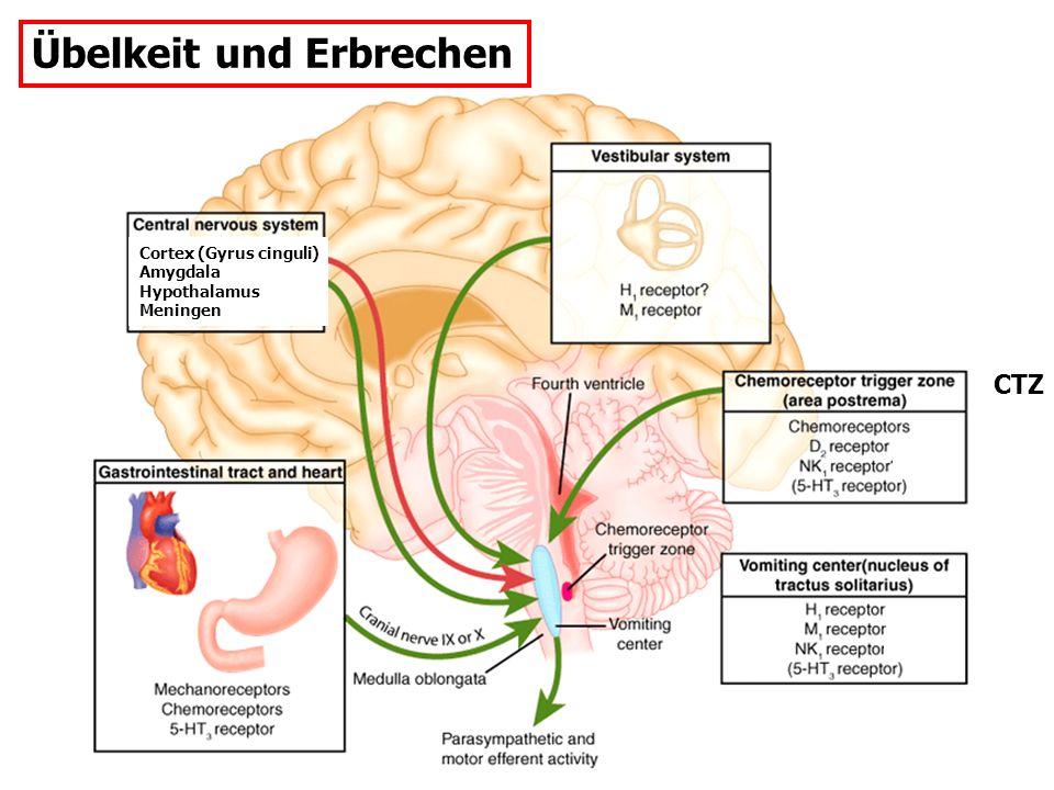 Übelkeit und Erbrechen CTZ Cortex (Gyrus cinguli) Amygdala Hypothalamus Meningen