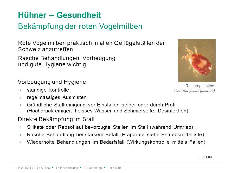 Hühner – Gesundheit Bekämpfung der roten Vogelmilben Bild: FiBL Rote Vogelmilben praktisch in allen Geflügelställen der Schweiz anzutreffen Rasche Beh