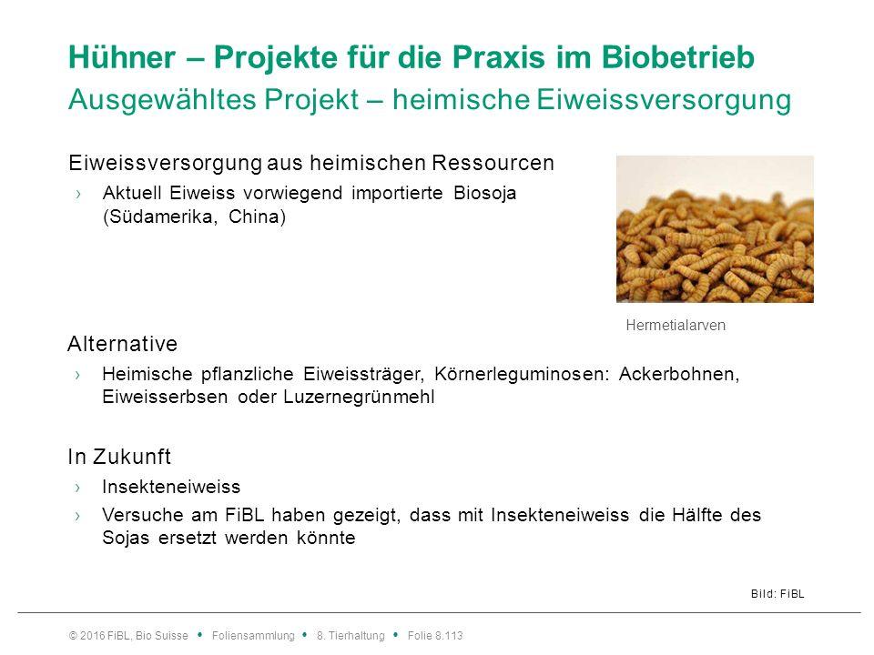 Hühner – Projekte für die Praxis im Biobetrieb Ausgewähltes Projekt – heimische Eiweissversorgung Bild: FiBL Eiweissversorgung aus heimischen Ressourc