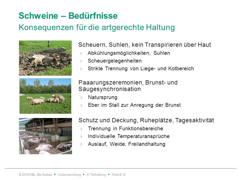 Schweine – Bedürfnisse Konsequenzen für die artgerechte Haltung Scheuern, Suhlen, kein Transpirieren über Haut ›Abkühlungsmöglichkeiten, Suhlen ›Scheu