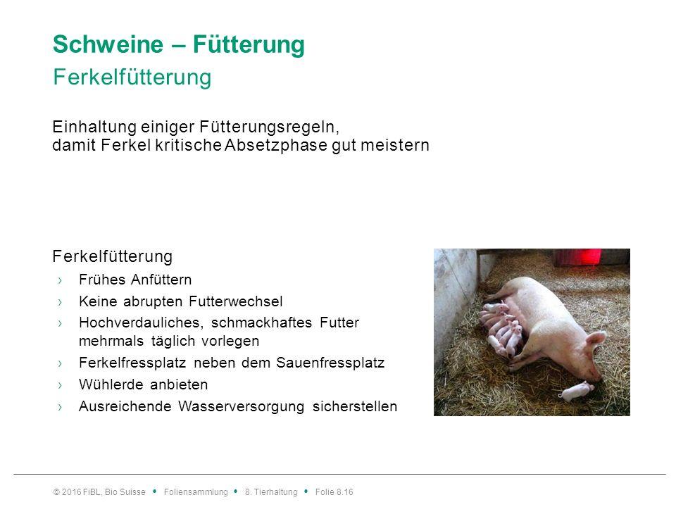 Schweine – Fütterung Ferkelfütterung Einhaltung einiger Fütterungsregeln, damit Ferkel kritische Absetzphase gut meistern Ferkelfütterung ›Frühes Anfü