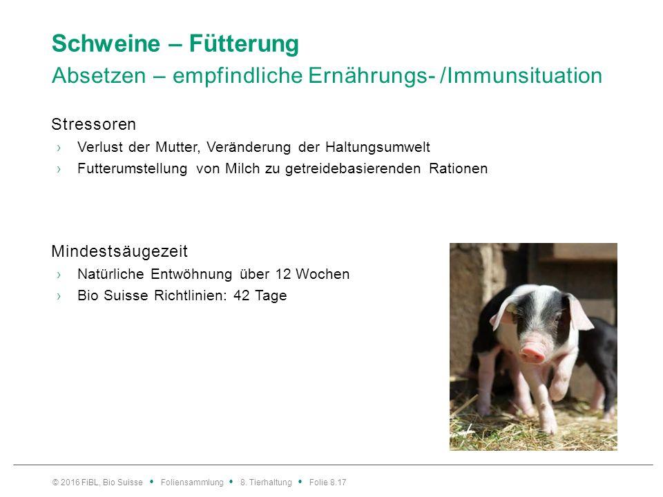 Schweine – Fütterung Absetzen – empfindliche Ernährungs- /Immunsituation Stressoren ›Verlust der Mutter, Veränderung der Haltungsumwelt ›Futterumstell