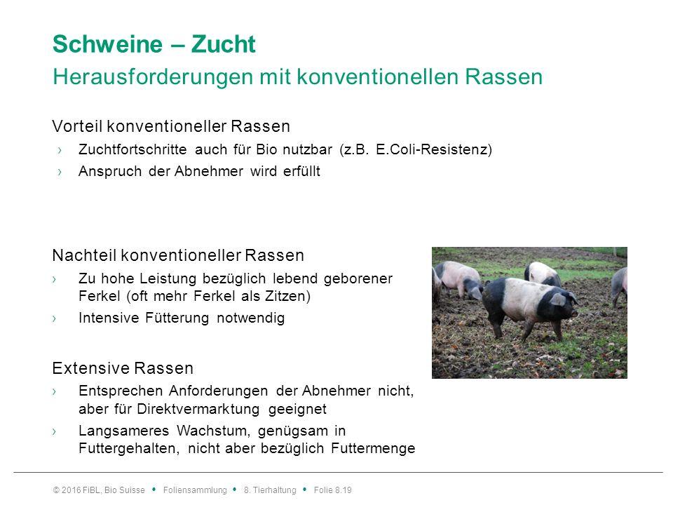 Schweine – Zucht Herausforderungen mit konventionellen Rassen Vorteil konventioneller Rassen ›Zuchtfortschritte auch für Bio nutzbar (z.B. E.Coli-Resi