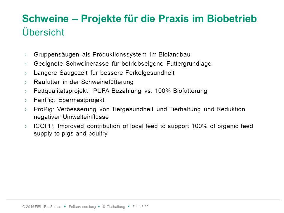 Schweine – Projekte für die Praxis im Biobetrieb Übersicht ›Gruppensäugen als Produktionssystem im Biolandbau ›Geeignete Schweinerasse für betriebseig