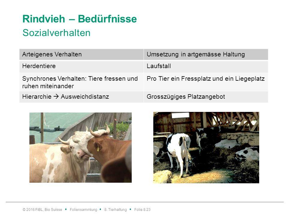 Rindvieh – Bedürfnisse Sozialverhalten © 2016 FiBL, Bio Suisse Foliensammlung 8. Tierhaltung Folie 8.23 Arteigenes VerhaltenUmsetzung in artgemässe Ha