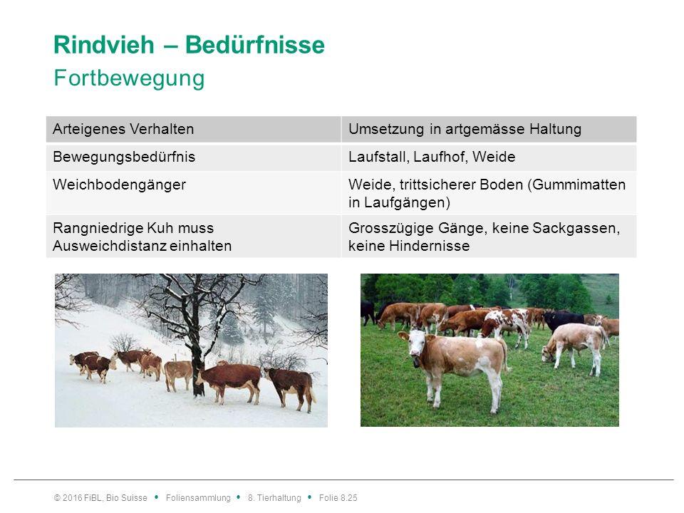 Rindvieh – Bedürfnisse Fortbewegung © 2016 FiBL, Bio Suisse Foliensammlung 8. Tierhaltung Folie 8.25 Arteigenes VerhaltenUmsetzung in artgemässe Haltu