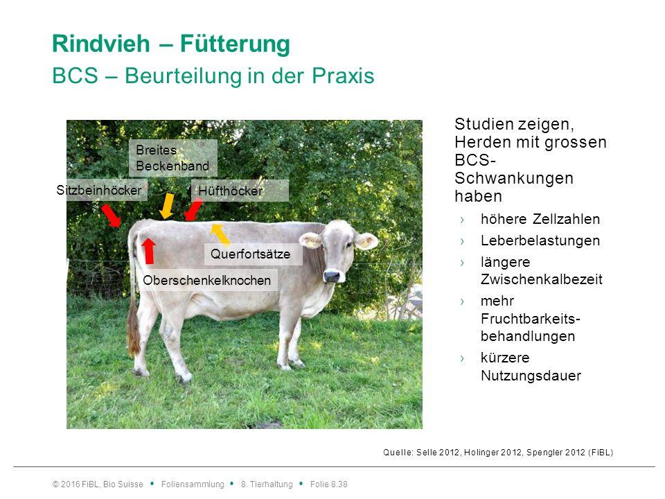 Rindvieh – Fütterung BCS – Beurteilung in der Praxis Quelle: Selle 2012, Holinger 2012, Spengler 2012 (FiBL) Studien zeigen, Herden mit grossen BCS- S