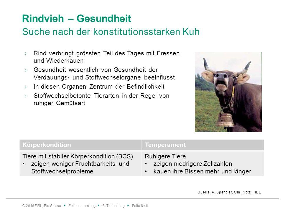 Rindvieh – Gesundheit Suche nach der konstitutionsstarken Kuh Quelle: A. Spengler, Chr. Notz, FiBL ›Rind verbringt grössten Teil des Tages mit Fressen