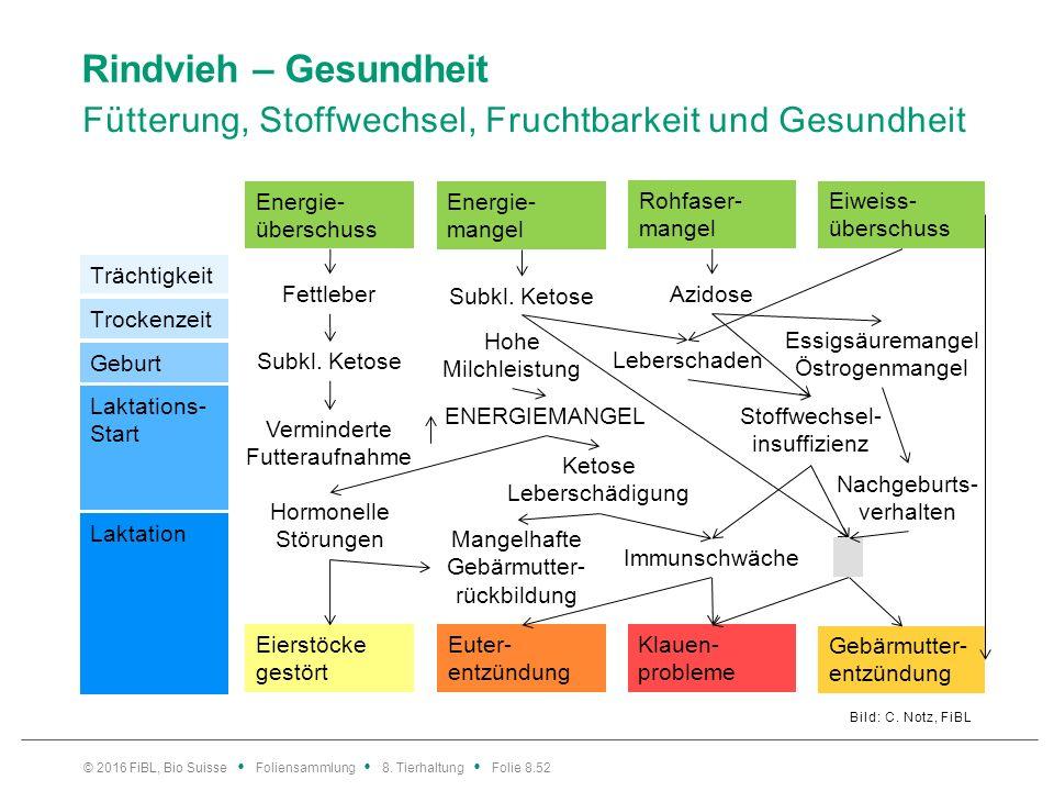 Rindvieh – Gesundheit Fütterung, Stoffwechsel, Fruchtbarkeit und Gesundheit Bild: C. Notz, FiBL © 2016 FiBL, Bio Suisse Foliensammlung 8. Tierhaltung