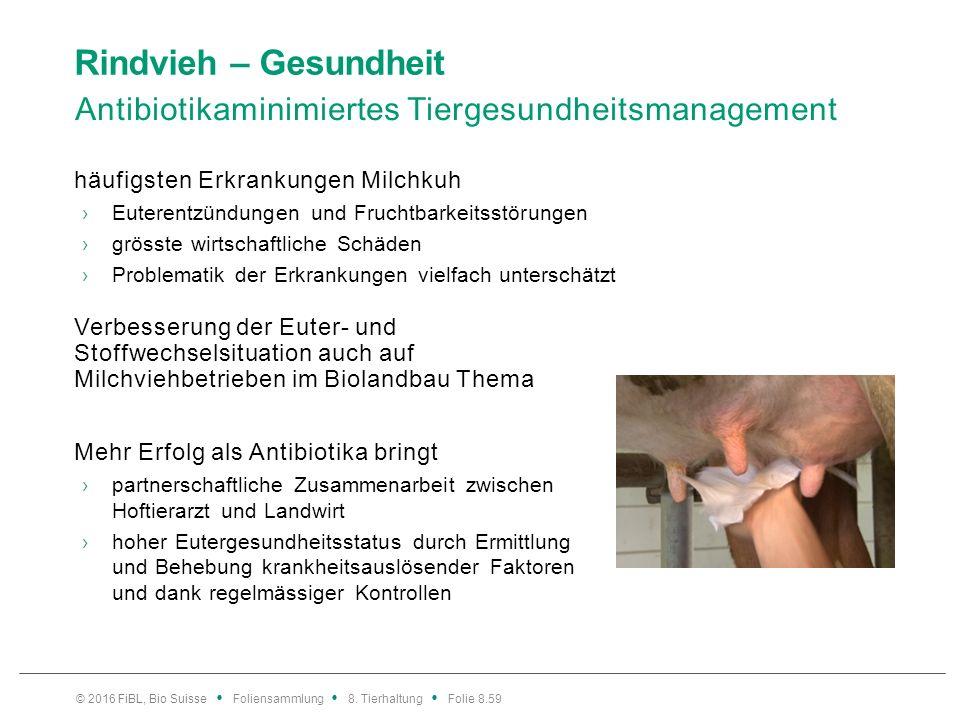 Rindvieh – Gesundheit Antibiotikaminimiertes Tiergesundheitsmanagement häufigsten Erkrankungen Milchkuh ›Euterentzündungen und Fruchtbarkeitsstörungen