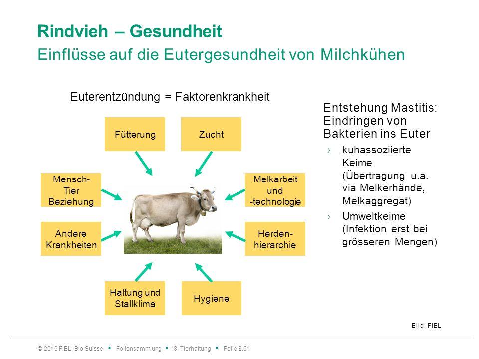 Rindvieh – Gesundheit Einflüsse auf die Eutergesundheit von Milchkühen Bild: FiBL Entstehung Mastitis: Eindringen von Bakterien ins Euter ›kuhassoziie