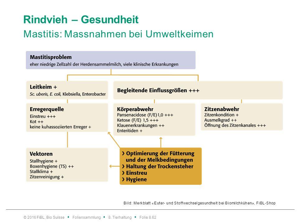 Rindvieh – Gesundheit Mastitis: Massnahmen bei Umweltkeimen Bild: Merkblatt «Euter- und Stoffwechselgesundheit bei Biomilchkühen», FiBL-Shop © 2016 Fi