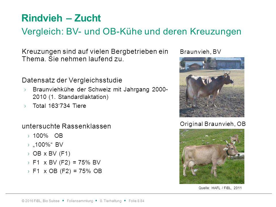 Rindvieh – Zucht Vergleich: BV- und OB-Kühe und deren Kreuzungen Quelle: HAFL / FiBL, 2011 Kreuzungen sind auf vielen Bergbetrieben ein Thema. Sie neh