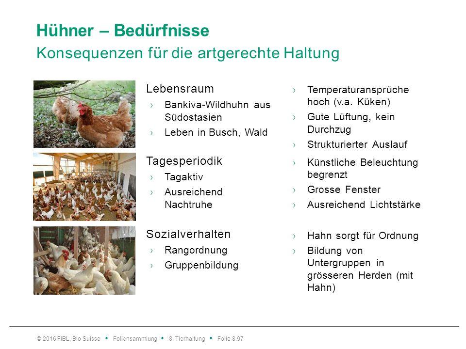 Hühner – Bedürfnisse Konsequenzen für die artgerechte Haltung Lebensraum ›Bankiva-Wildhuhn aus Südostasien ›Leben in Busch, Wald ›Temperaturansprüche