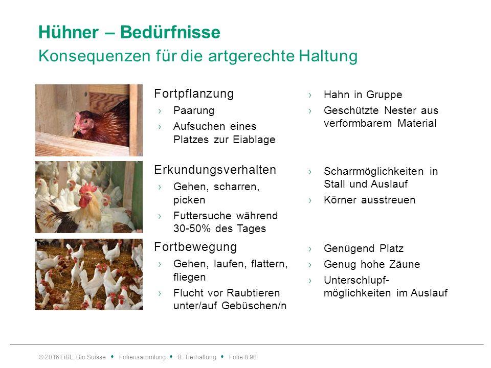 Hühner – Bedürfnisse Konsequenzen für die artgerechte Haltung Fortpflanzung ›Paarung ›Aufsuchen eines Platzes zur Eiablage ›Hahn in Gruppe ›Geschützte