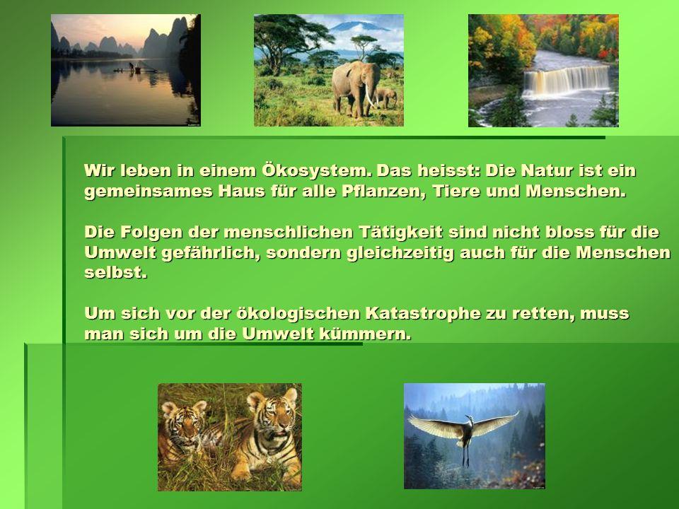 Wir leben in einem Ökosystem. Das heisst: Die Natur ist ein gemeinsames Haus für alle Pflanzen, Tiere und Menschen. Die Folgen der menschlichen Tätigk