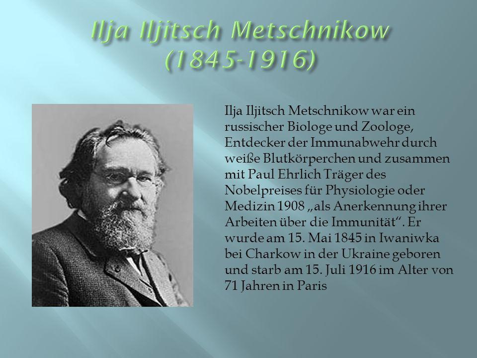 """Ilja Iljitsch Metschnikow war ein russischer Biologe und Zoologe, Entdecker der Immunabwehr durch weiße Blutkörperchen und zusammen mit Paul Ehrlich Träger des Nobelpreises für Physiologie oder Medizin 1908 """"als Anerkennung ihrer Arbeiten über die Immunität ."""