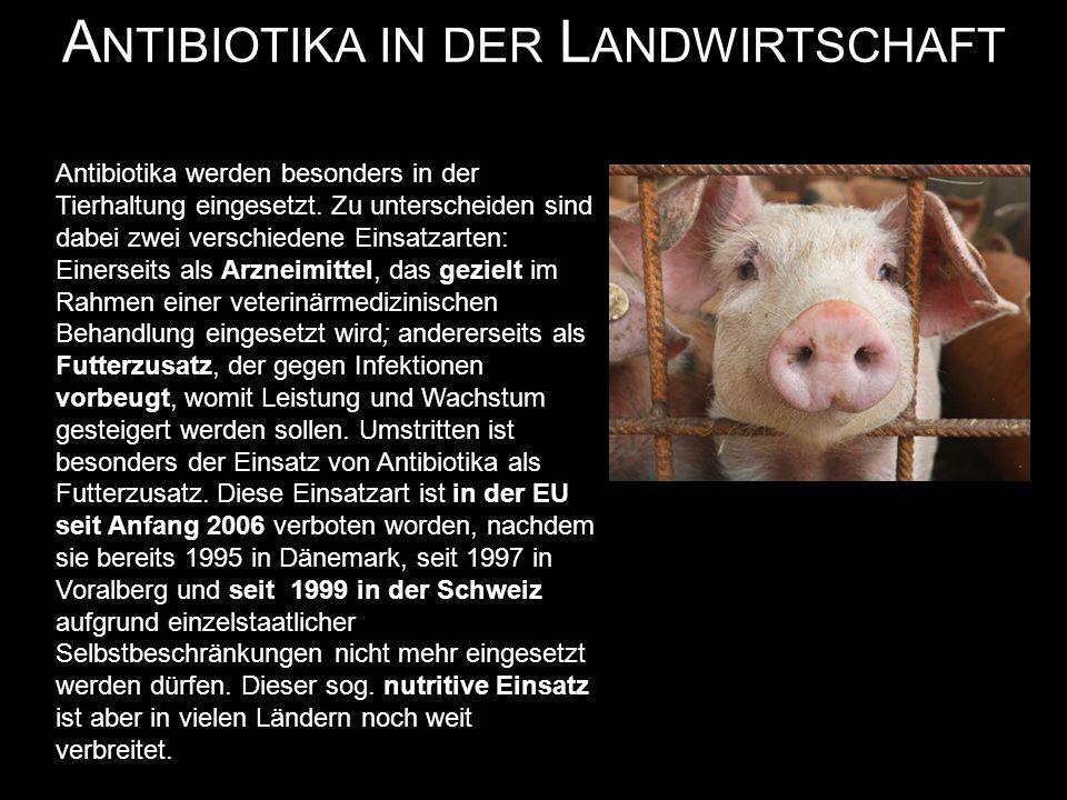Antibiotika werden besonders in der Tierhaltung eingesetzt.