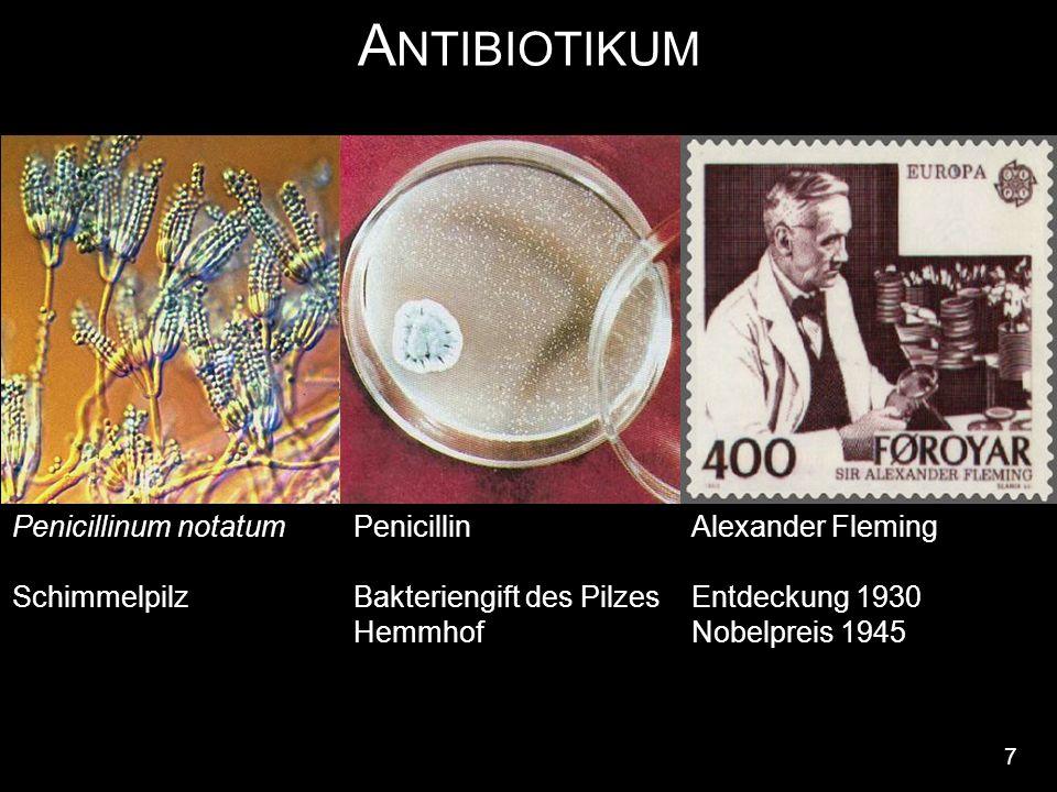 A NTIBIOTIKUM 7 Penicillin Bakteriengift des Pilzes Hemmhof Penicillinum notatum Schimmelpilz Alexander Fleming Entdeckung 1930 Nobelpreis 1945