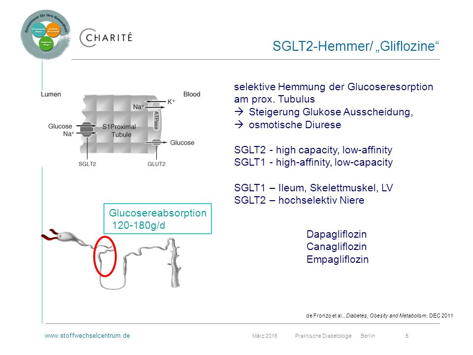 www.stoffwechselcentrum.de März 2016 Praktische Diabetologie Berlin 5 Glucosereabsorption 120-180g/d selektive Hemmung der Glucoseresorption am prox.