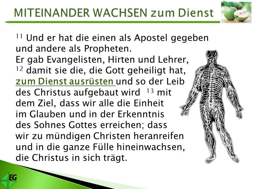 11 Und er hat die einen als Apostel gegeben und andere als Propheten. Er gab Evangelisten, Hirten und Lehrer, 12 damit sie die, die Gott geheiligt hat