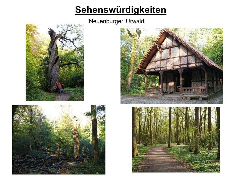Sehenswürdigkeiten Neuenburger Urwald