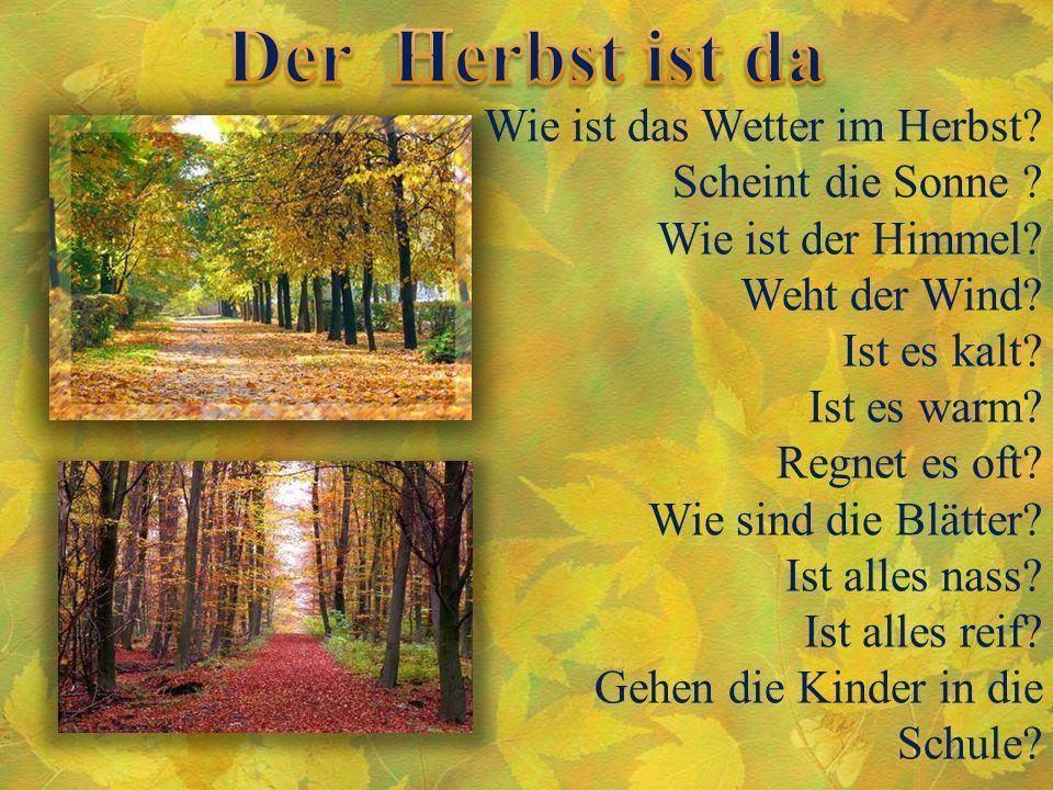 Wie ist das Wetter im Herbst? Scheint die Sonne ? Wie ist der Himmel? Weht der Wind? Ist es kalt? Ist es warm? Regnet es oft? Wie sind die Blätter? Is