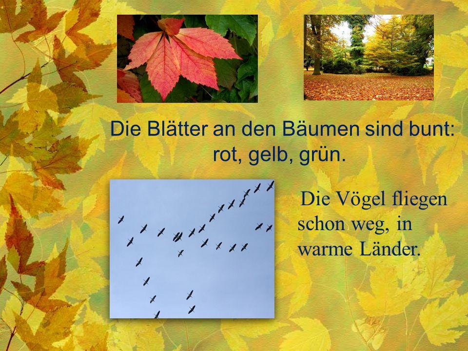 Die Blätter an den Bäumen sind bunt: rot, gelb, grün. Die Vögel fliegen schon weg, in warme Länder.