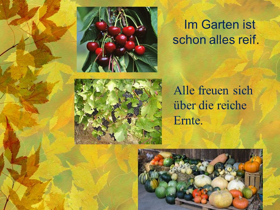 Im Garten ist schon alles reif. Alle freuen sich über die reiche Ernte.