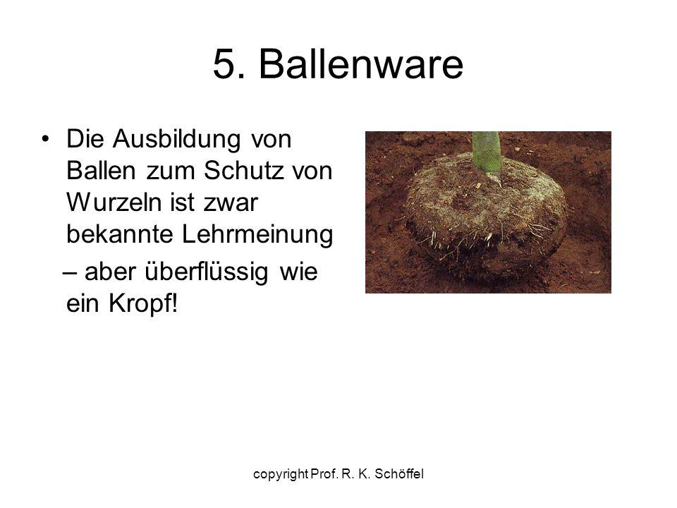 5. Ballenware Die Ausbildung von Ballen zum Schutz von Wurzeln ist zwar bekannte Lehrmeinung – aber überflüssig wie ein Kropf! copyright Prof. R. K. S