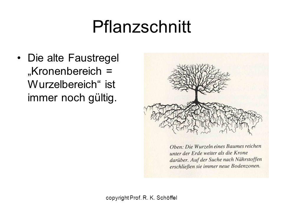 """Pflanzschnitt Die alte Faustregel """"Kronenbereich = Wurzelbereich"""" ist immer noch gültig. copyright Prof. R. K. Schöffel"""