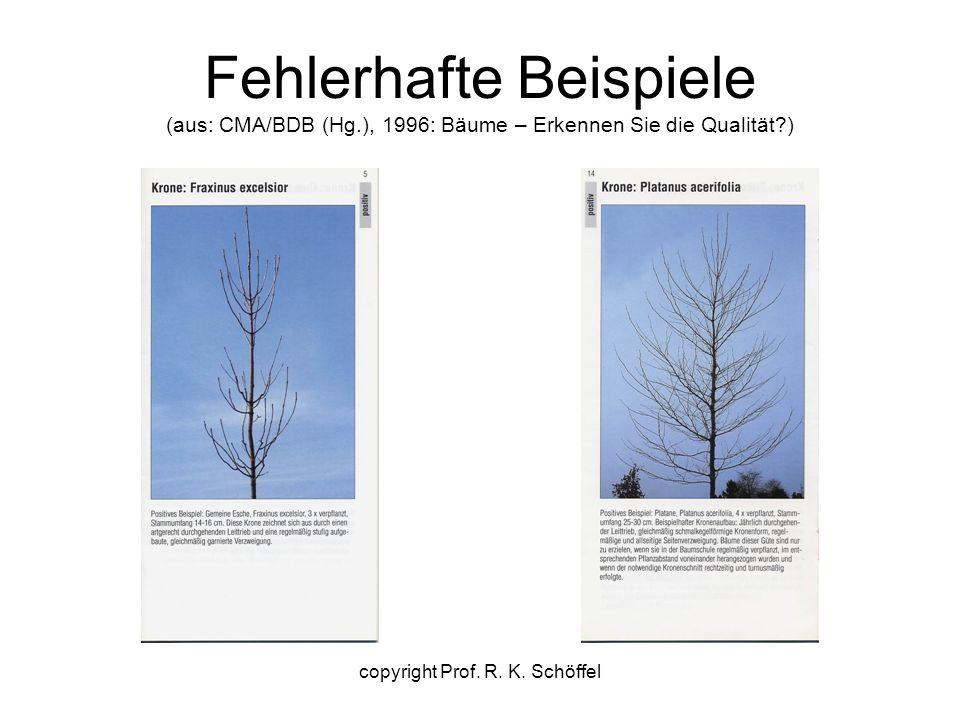 Fehlerhafte Beispiele (aus: CMA/BDB (Hg.), 1996: Bäume – Erkennen Sie die Qualität ) copyright Prof.