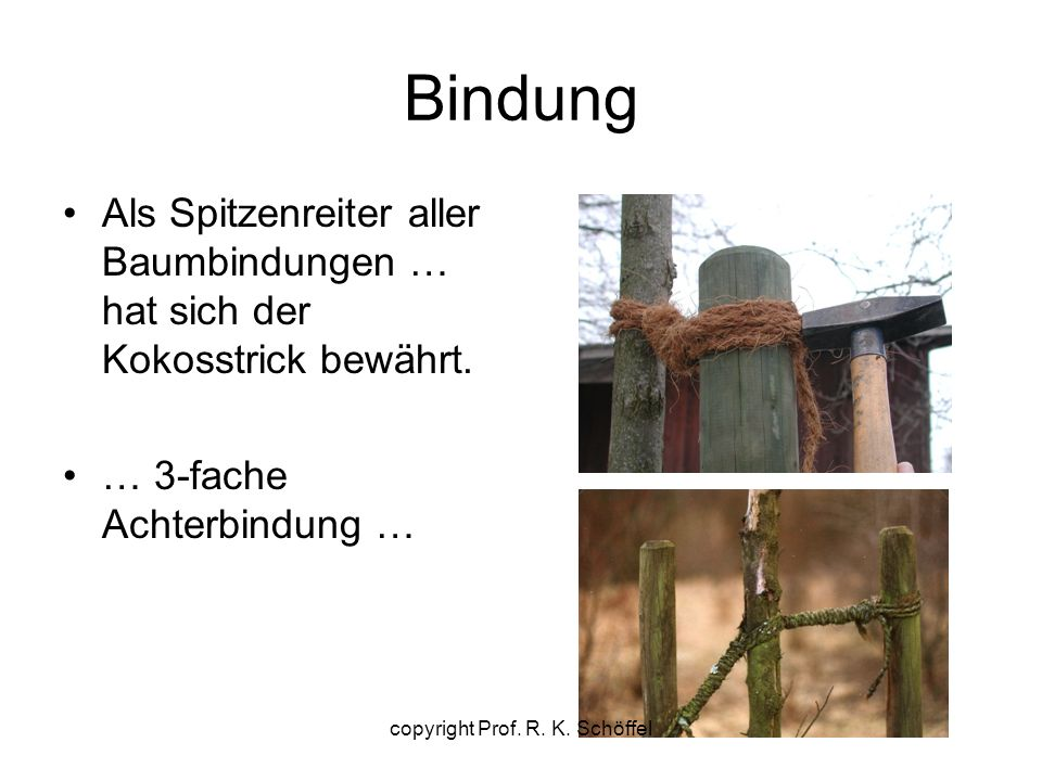 Bindung Als Spitzenreiter aller Baumbindungen … hat sich der Kokosstrick bewährt. … 3-fache Achterbindung … copyright Prof. R. K. Schöffel