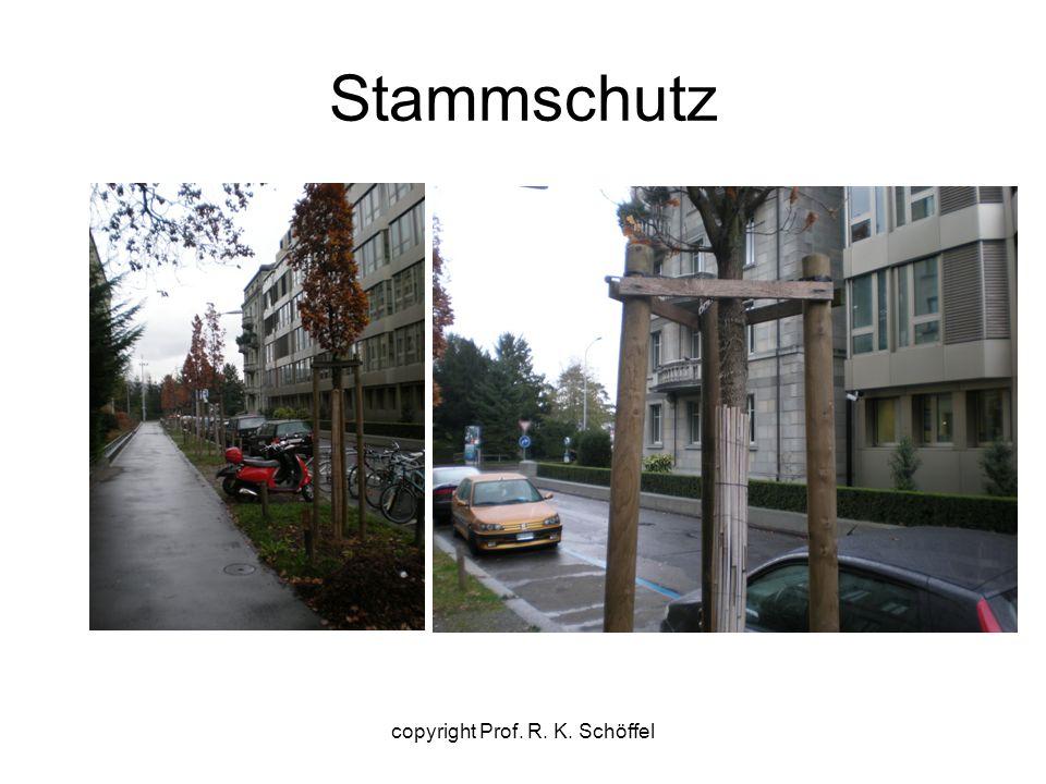 Stammschutz copyright Prof. R. K. Schöffel