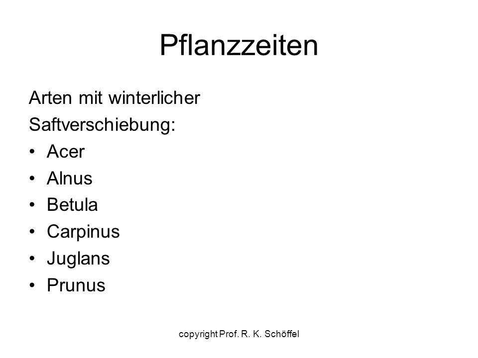 Pflanzzeiten Arten mit winterlicher Saftverschiebung: Acer Alnus Betula Carpinus Juglans Prunus copyright Prof. R. K. Schöffel