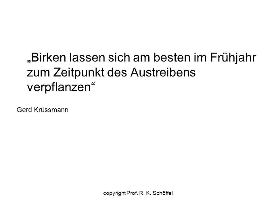 """""""Birken lassen sich am besten im Frühjahr zum Zeitpunkt des Austreibens verpflanzen"""" Gerd Krüssmann copyright Prof. R. K. Schöffel"""