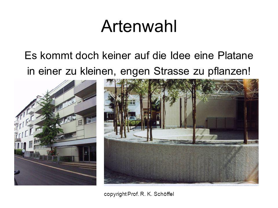 Artenwahl Es kommt doch keiner auf die Idee eine Platane in einer zu kleinen, engen Strasse zu pflanzen! copyright Prof. R. K. Schöffel