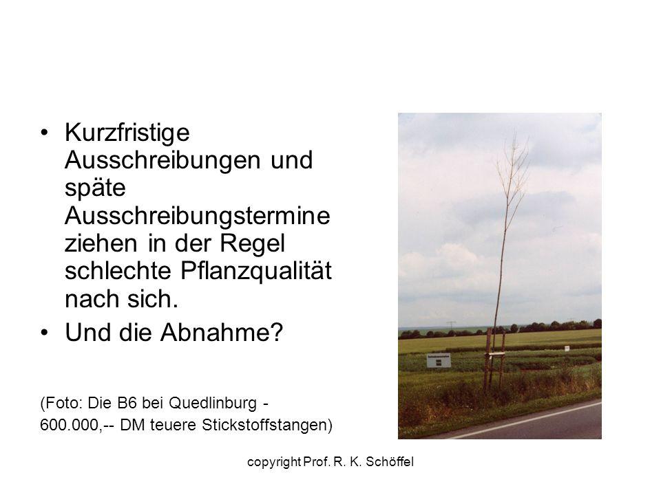Pflanzzeiten Arten mit winterlicher Saftverschiebung: Acer Alnus Betula Carpinus Juglans Prunus copyright Prof.