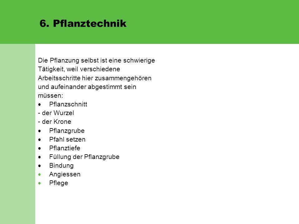 6. Pflanztechnik Die Pflanzung selbst ist eine schwierige Tätigkeit, weil verschiedene Arbeitsschritte hier zusammengehören und aufeinander abgestimmt