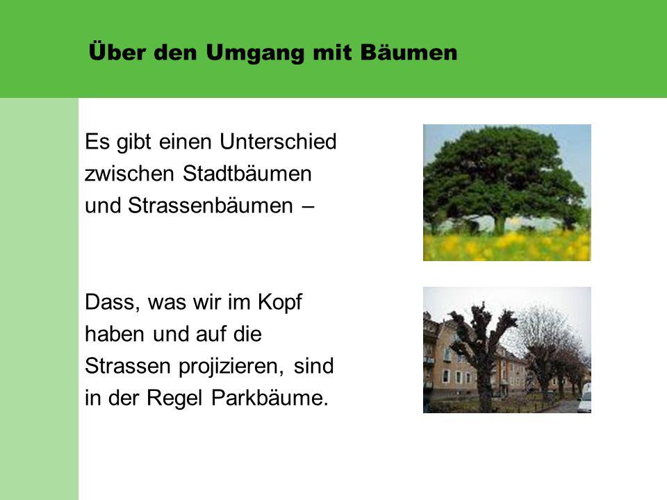 Über den Umgang mit Bäumen Es gibt einen Unterschied zwischen Stadtbäumen und Strassenbäumen – Dass, was wir im Kopf haben und auf die Strassen projizieren, sind in der Regel Parkbäume.