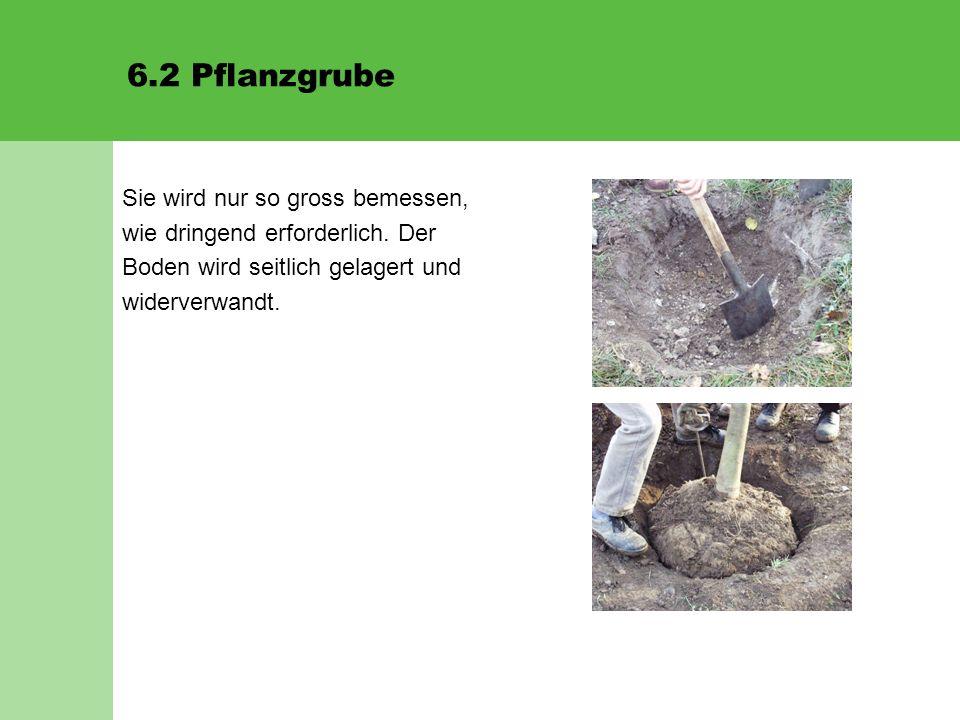 6.2 Pflanzgrube Sie wird nur so gross bemessen, wie dringend erforderlich. Der Boden wird seitlich gelagert und widerverwandt.