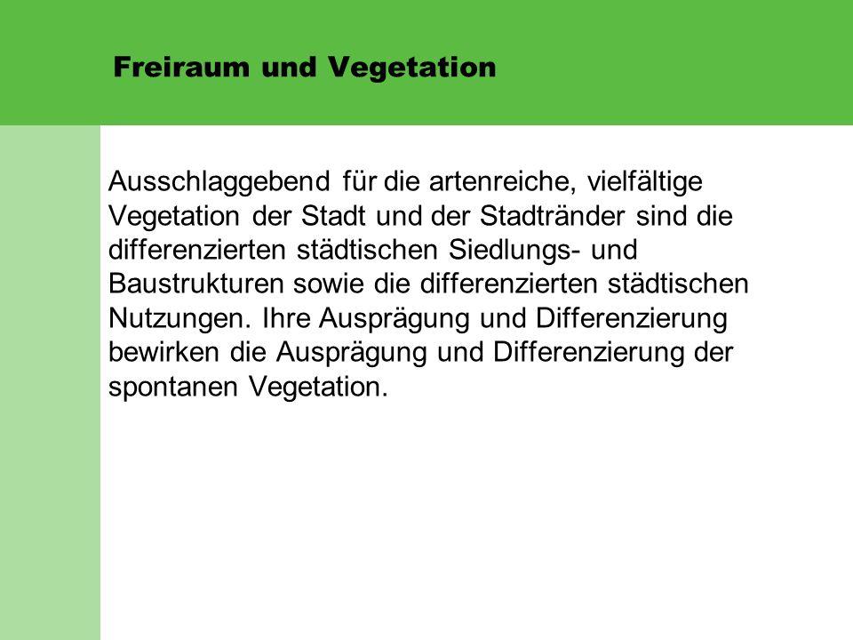 Freiraum und Vegetation Ausschlaggebend für die artenreiche, vielfältige Vegetation der Stadt und der Stadtränder sind die differenzierten städtischen