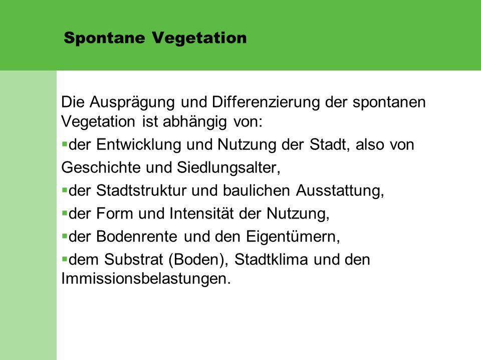 Spontane Vegetation Die Ausprägung und Differenzierung der spontanen Vegetation ist abhängig von:  der Entwicklung und Nutzung der Stadt, also von Ge