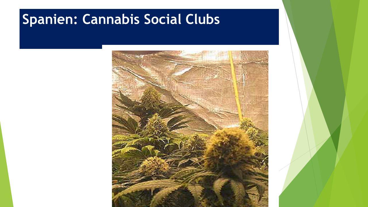 Spanien: Cannabis Social Clubs