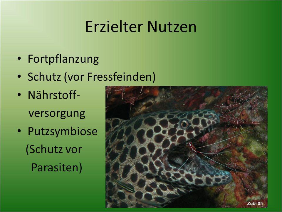 Erzielter Nutzen Fortpflanzung Schutz (vor Fressfeinden) Nährstoff- versorgung Putzsymbiose (Schutz vor Parasiten)