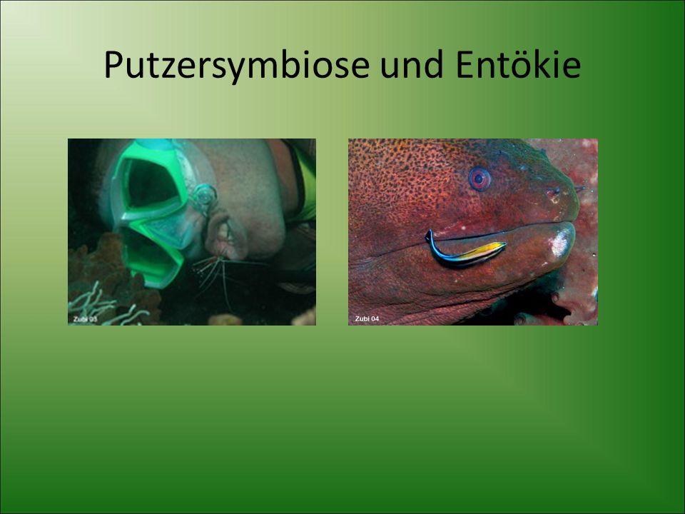 Putzersymbiose und Entökie